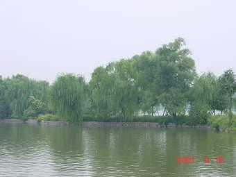 乔灌木的种植设计 - guorq05的日志 - 网易博客