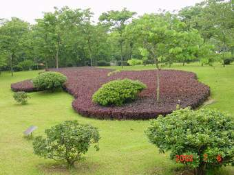 园林植物的种植设计