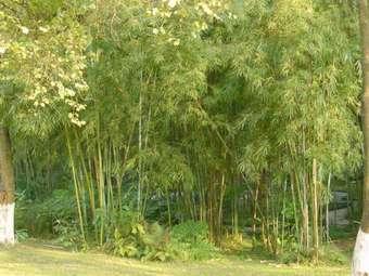 乔灌木的种植设计 - guorq05 - 青山不墨千秋画 流水无弦万古琴