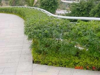 园林植物种植设计分享展示