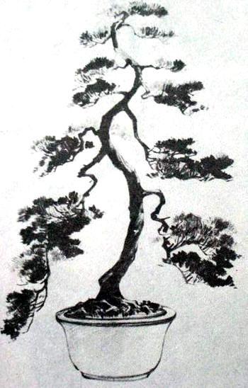 中国盆景欣赏及制作技艺(二) - 红叶 - 日知斋