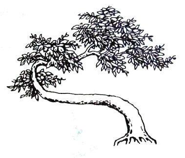 中国盆景欣赏及制作技艺之六——盆景的欣赏内容 - wjh.z - 寿乡翁的博客
