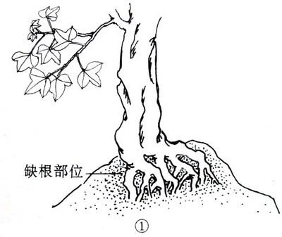 中国盆景欣赏及制作之七 - 乘成 - 乘成休闲吧