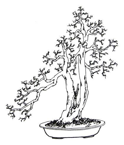 中国盆景欣赏及制作技艺之十——树桩盆景制作图解 - wjh.z - 寿乡翁的博客