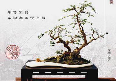 中国盆景欣赏及制作技艺(六) - 红叶 - 日知斋