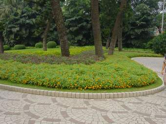 园林植物种植设计基础